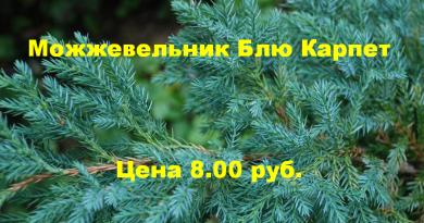 В питомнике растений в Могилевском районе (Подгорье) предлагаем Можжевельник Блю Карпет за 8.00 рублей