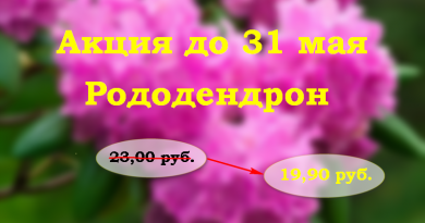 Подгорье. Акция на родендрон. Цена 19.90 руб.
