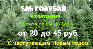 Ель голубая в декабре по унгам от 20 до 45 руб в питомнике Подгорье